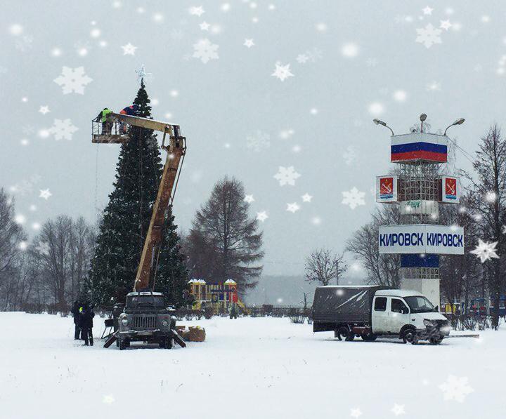 Елки-иголки в Кировске
